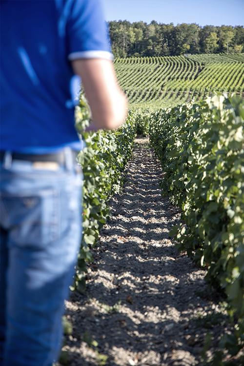 Benjamin Beurton avec des vignes en arrière plan