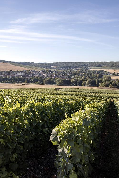 Panorama des vignes avec ciel bleu Beurton & Fils