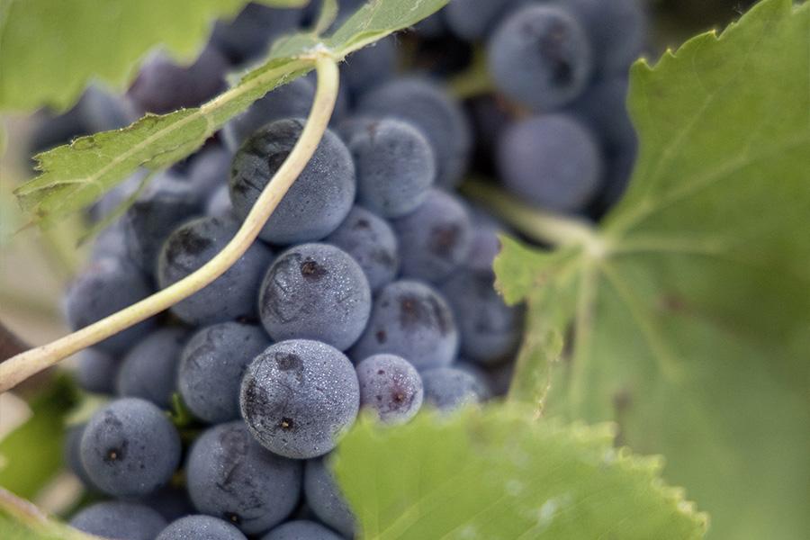 raisins meunier beurton et fils
